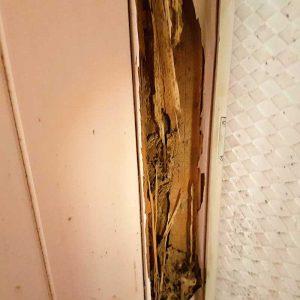 termite_damage_img4