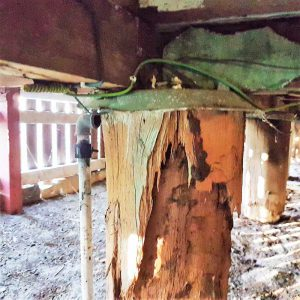 termite_damage_img1