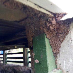 termite_damage_img5