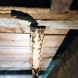 termite_damage_img6