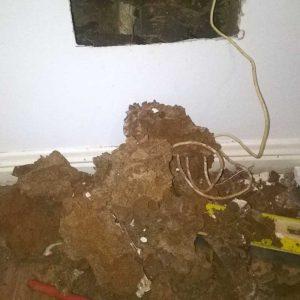 termite_damage_img7